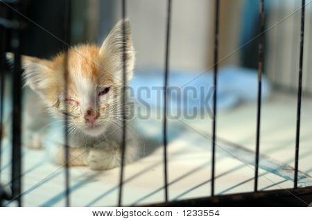 Injured Kitten Rescued