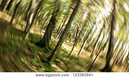 Autumn forest in a swirl motion like hallucination
