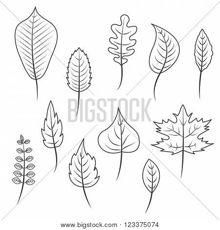Outlined black and white leaves in flat style vector set. Oak leaf, chestnut leaf, maple, birch and acacia leaves.
