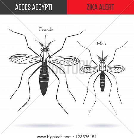 Zika alert banner poster or flyer with male and female aegypti aedes mosquitoes. High quality graphic design elements isolated on white background with shadow. Healthcare concept.