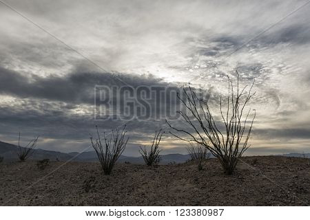 Landscape In The Anza-borrego Desert