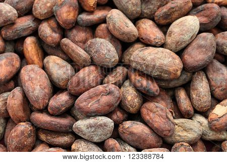 raw cacao cocoa beans in wooden bowl