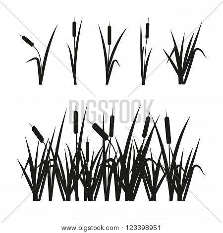 Reeds set. Design elements isolated on white background.