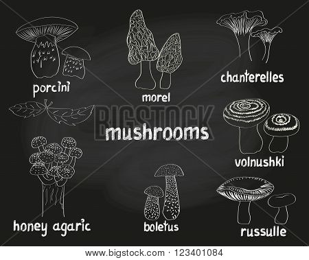Mushrooms set. Collection of doodle hand drawn eatable fungus isolated on black. Vector sketchy illustrations.