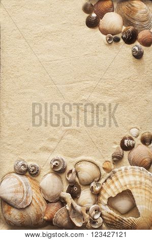 Sea Shells On A Sand
