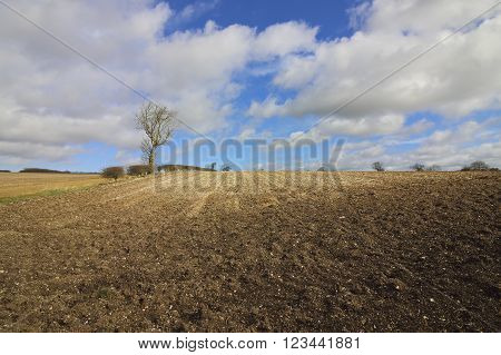 chalky plowed soil in the yorkshire wolds in winter with bare trees and hedgerows under a blue cloudy sky