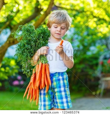 cute preschool blond little kid boy with carrots in domestic garden. Child gardening and eating outdoors. Healthy organic vegetables as snack for kids and kindergarten children