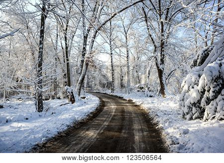 Dirt road and trees covered with snow after winter storm