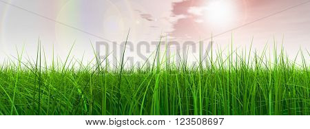 3D illustration of a conceptual green, fresh and natural grass field or lawn, rainbow sky background in spring or summer banner