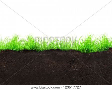 Green grass growth from ground on white background