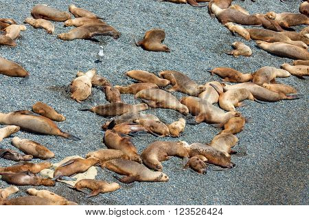 Sleeping sea lions - Puerto Madryn, Argentina