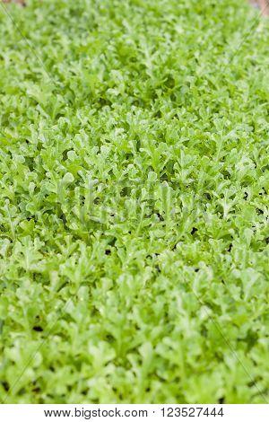 Young green oak in organic farm, stock photo