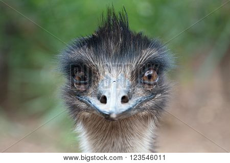 Cute ostrich. Ostrich portrait on a green leaves background