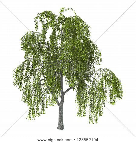 3D Illustration Green Willow On White