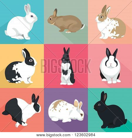 Easter Bunny vector illustration  Rabbits set colorful retro style