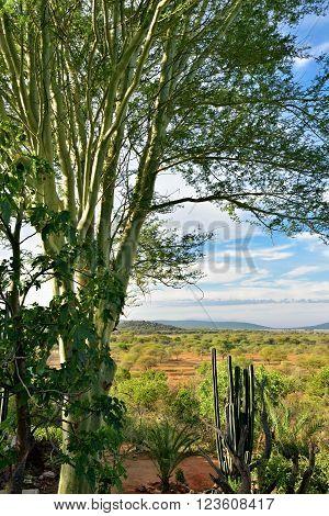 Namibian Landscape, Africa