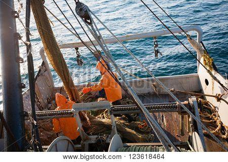 Fishermen pull trawl fish. Sea of Japan.