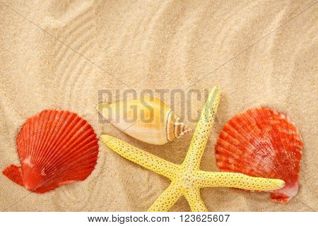 Fingerfish And Seashells In Sand