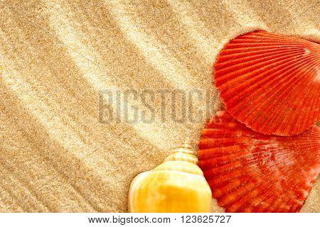Seashells In Wavy Sand