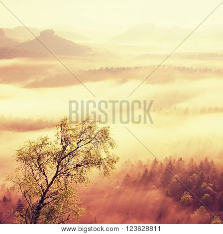 Fairy Daybreak. Misty Awakening In A Beautiful Hills.  Filtered Image: Processed Vintage Effect.