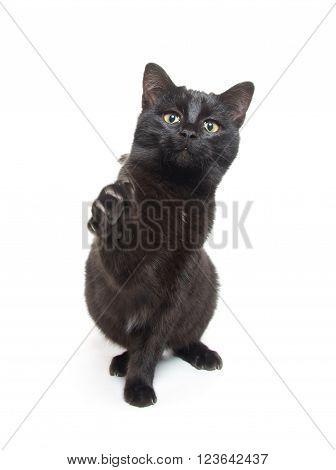 Cute Black Cat Swinging Its Paws