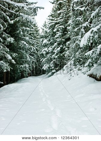 Snow covered footpath beside snowy fir trees at winter forest