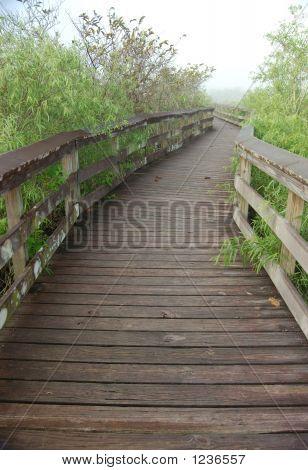 Boardwalk In Anhinga Trail