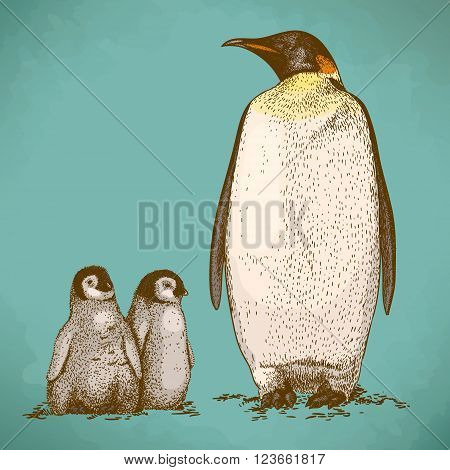 Engraving antique illustration of king penguin and two penguin nestling in retro style