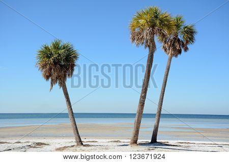 three palm trees on white sand beach nature concept