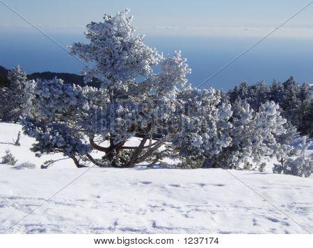 Snow-Bound