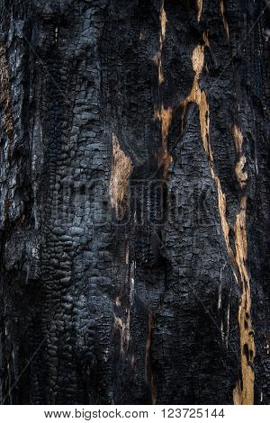 Background close-up of burned wood, charred wood texture