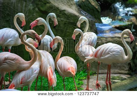 Flamingo Phoenicopterus in Kuala Lumpur, KL Bird Park, Malaysia ** Note: Soft Focus at 100%, best at smaller sizes