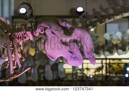 Monaco, Monaco - May 21: This is one of the exhibition halls of the Museum of Oceanography May 21, 2015 in Monaco, Monaco.