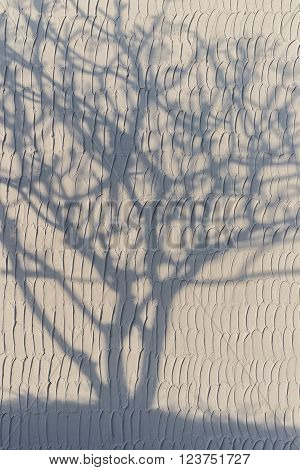 Shadow of tree whiteout on the white wall