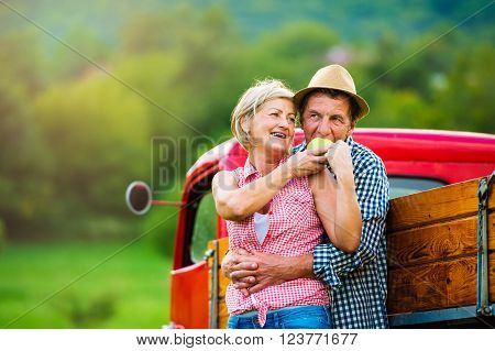 Senior couple harvesting fruit, standing at red vintage pickup truck, woman holding apple, man eating it