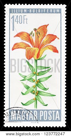HUNGARY - CIRCA 1966 : Cancelled postage stamp printed by Hungary, that shows Lilium bulbiferum.