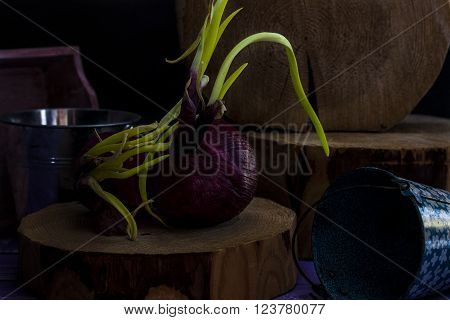 sprouted red onion salad on a dark background