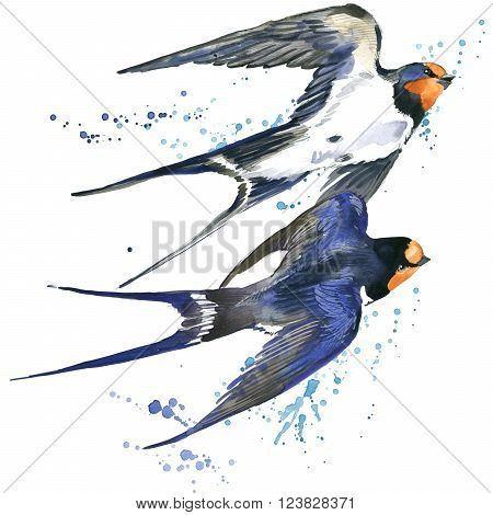 Swallow. Swallow watercolor illustration. Spring Bird. Bird Swift. Swift flight