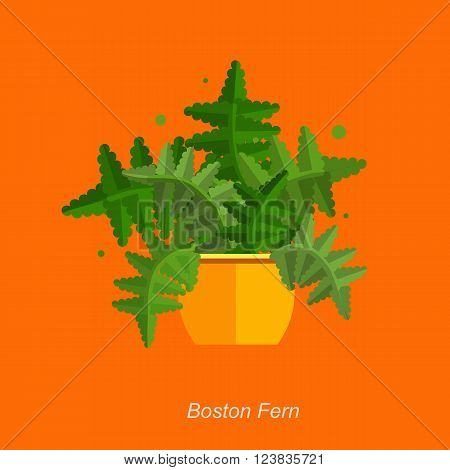 Illustration of houseplant, indoor and office plant in pot. Vector plant fern in pot. Flat fern, vector icon of fern. Office plant in pot.