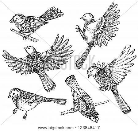Ste of hand drawn ornate birds. Black and white vector illustration. Each object is isolated on a white background.
