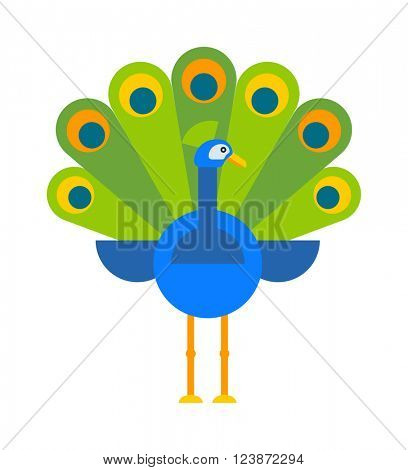 Beautiful nature bird peacock and wildlife bright peacock. Tropical peafowl bright elegance bird. Beautiful peacock colorful blue beautiful nature bird and wildlife bright tropical peafowl flat vector