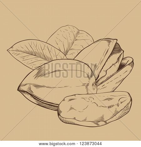 Pistachio vector isolated on brown background. Pistachio seeds. Engraved vector illustration of leaves and nuts of pistachio. Pistachio in vintage style.
