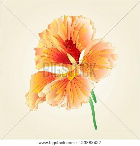 Watercress Spring flower vegetable healthy food vector illustration