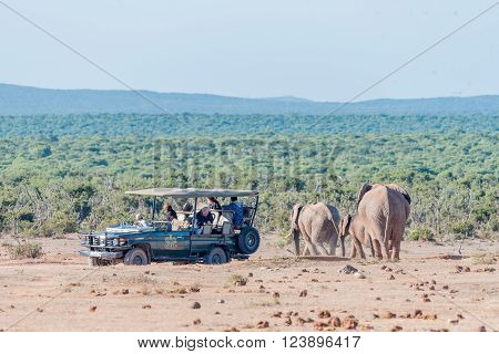 ADDO ELEPHANT NATIONAL PARK SOUTH AFRICA - FEBRUARY 23 2016: Unidentified tourists on a safari vehicle in a close encounter with elephants