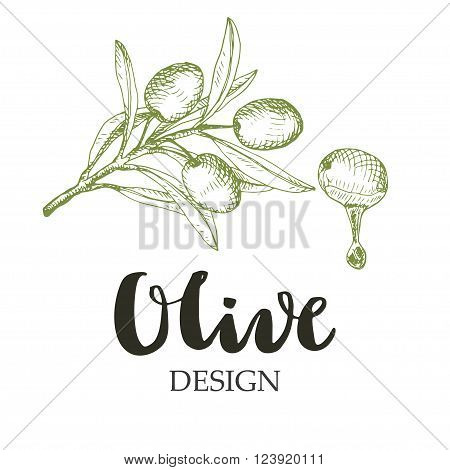 Olive design illustration. Sketch drawing of branch and olive fruit with oil drop.