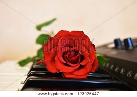 Red rose close-up over keybord. Green leaves. Beauty, love and Valentine's Day concept.