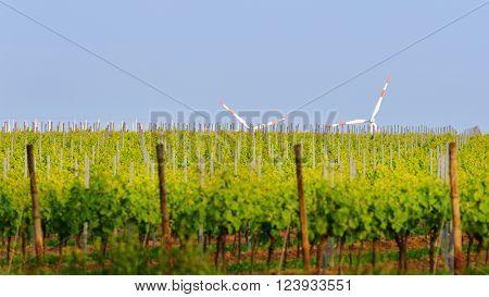 Vineyard Landscape With Wind Generators In Pfalz, Germany