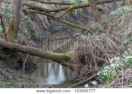 Uprooted Trees Across The River In Nature Reserve