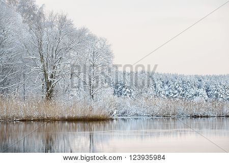 Beautiful winter landscape. Snowcovered forest reflecting in calm lake water. Latvia