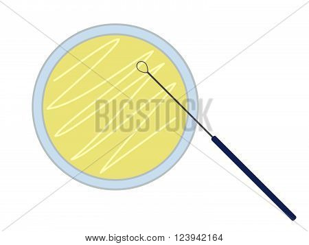Petri dish with nutrient medium and inoculation loop